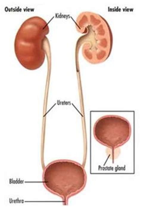 Blood In Stool And Urine by 1000 Images About Blood In Urine Hematuria On