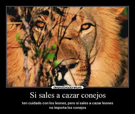 imagenes de leones fuertes si sales a cazar conejos desmotivaciones