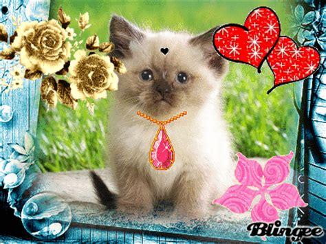 imagenes animadas bonitas y tiernas gato himalayo picture 128977225 blingee com