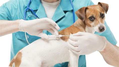 puppy microchip barc lowering pet microchip prices to 5 for lost pet prevention month abc13