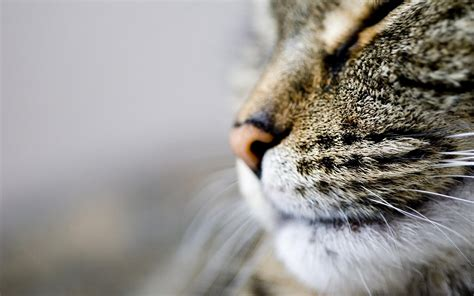cat nose whiskers cat nose whiskers hd desktop wallpapers 4k hd