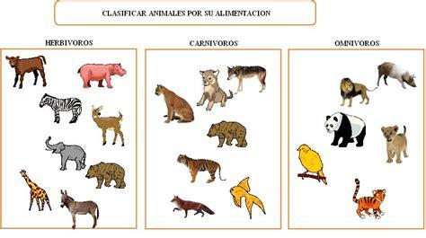 imagenes animales carnivoros herviboros omnivoros los animales herbivoros y carnivoros imagui