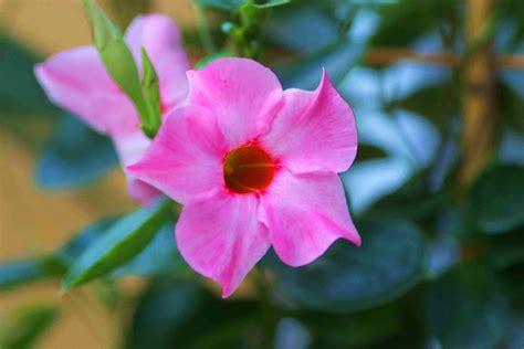 Garten Pflanzen Wenig Sonne by Welche Vertragen Viel Sonne Pflanzen Die Viel Sonne