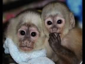 monkeys for sale at the bird market pasar burung