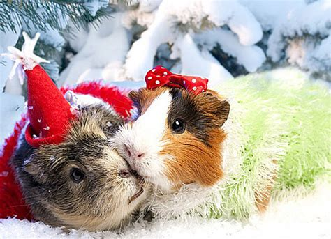 images of christmas animals christmas craciun christmas animals