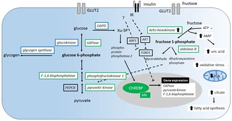 nutrients  full text insights   hexose liver metabolismglucose  fructose