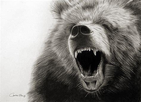 10  Bear Drawings Showcase   Hative