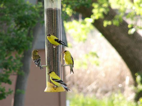 best 28 why are birds not from my bird feeder why our