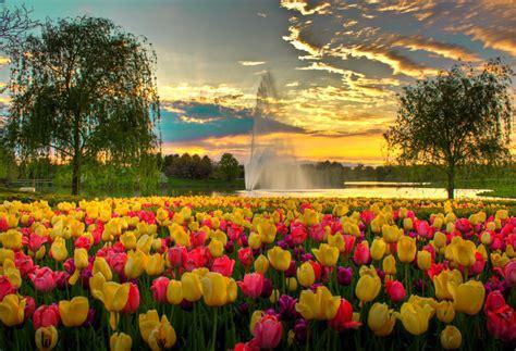 Biji Bunga Peony Biru bunga tulip trending topics