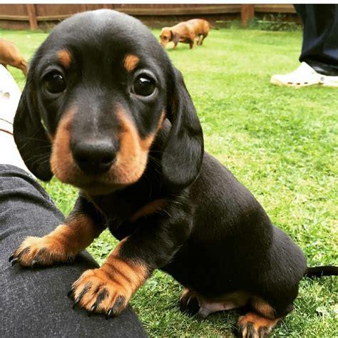 imagenes relajantes de animales perros m 225 s tiernos de la semana im 225 genes taringa
