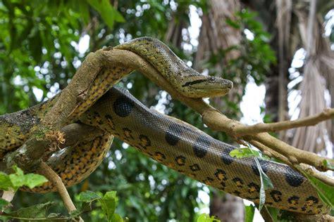 amazon rainforest animals amazon rainforest animals april 2014