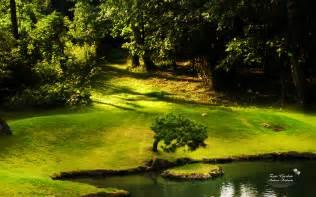 zen garden images download garden zen wallpaper 1440x900 wallpoper 355329