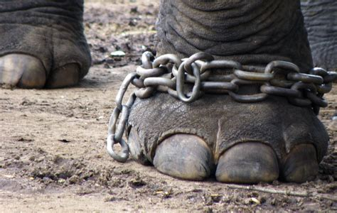 Animal Cruelty In Circuses Essay by Do You Enjoy The Circus The Animals Don T