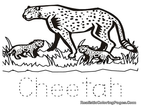 Realistic Cheetah Coloring Pages by Free Coloring Pages Of Cheetah Realistic Coloring Pages