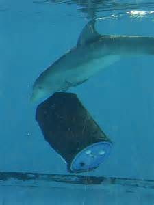 Winter the dolphin at clearwater marine aquarium outdoor adventures