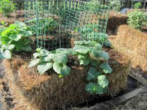 Gardening With Hay Bales Central Virginia Organic Gardener Straw Bale Gardening