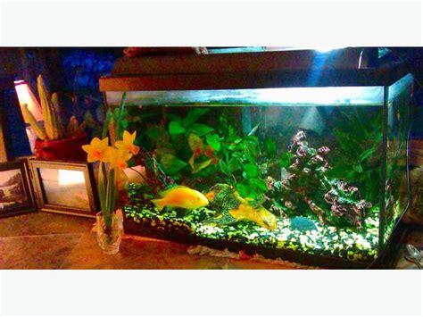 membuat filter aerator aquarium 10 gallon fish tank 5 gallon filter aerator north