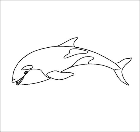 free printable killer whale coloring pages for kids
