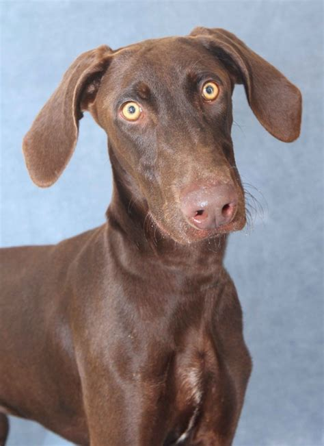 san diego puppy adoption adopt a san diego machel shull