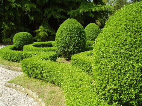 alberelli da giardino asn leggi argomento alberelli da giardino