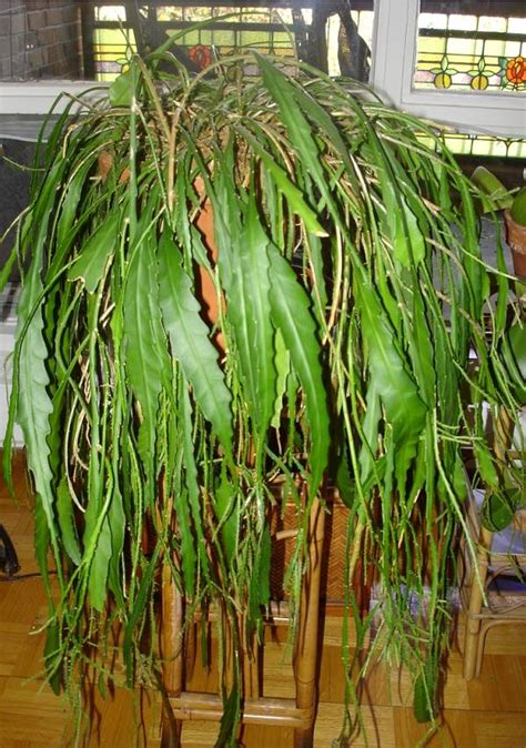 No Sun Plants Indoor by Orchid Cactus Houseplant Identification And Care