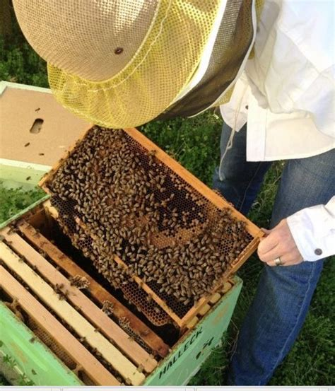 raising honey bees in your backyard 17 best images about honey hives on pinterest the winter
