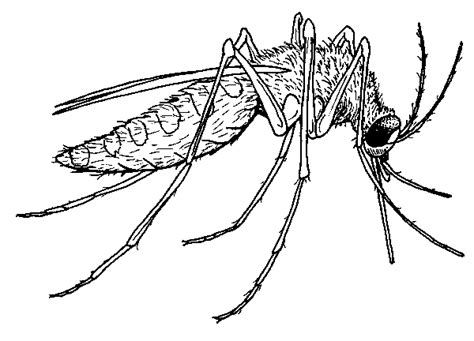 mosquito coloring pages