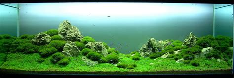 aquascape amano aquascaping styles aquascapers
