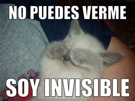 Spanish Memes - 17 best images about spanish memes on pinterest spanish