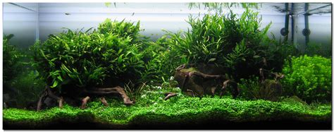 What Is Aquascaping by Aquascape Of The Month August 2009 Quot Wakrubau