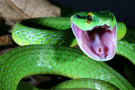 imagenes impresionantes de serpientes fotoas de serpientes imagui
