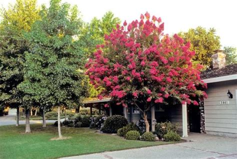 best trees for backyard best trees for your yard homesteading and livestock