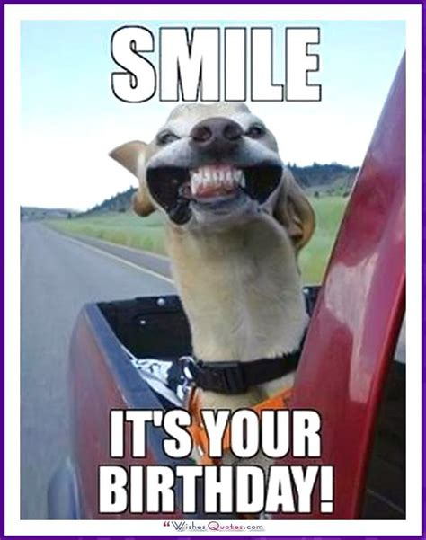 Birthday Animal Meme - the 25 best happy birthday dog meme ideas on pinterest