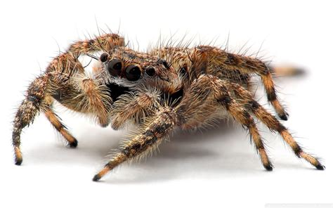 spider images spider hd wallpapers pictures hd wallpapers