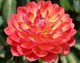 Most Popular Flower by Most Beautiful Flowers List List Of Top Ten