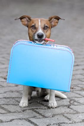 traveling with puppy vacation time 5 tips for packing a puppy bag when you board your