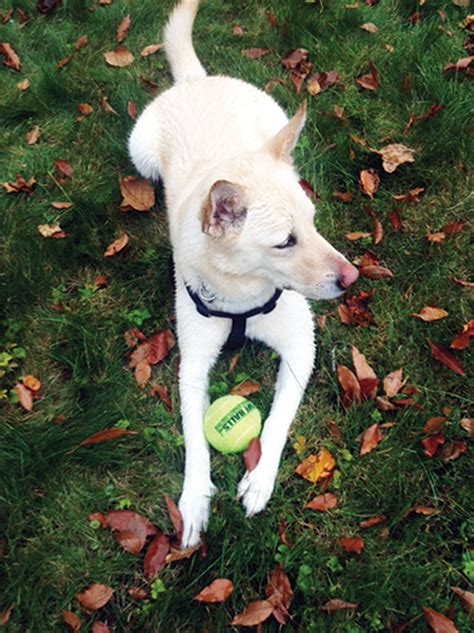 minocycline for dogs minocycline lyme disease
