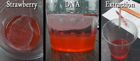 strawberry dn aextraction