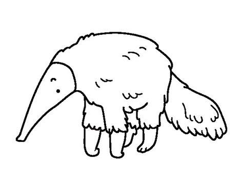 imagenes de animales insectivoros para colorear dibujo de oso hormiguero peludo para colorear dibujos net