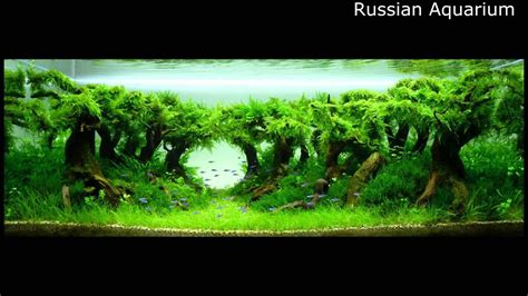 The Best Aquascape by Best World Aquascape Underwater Landscapes Awesome