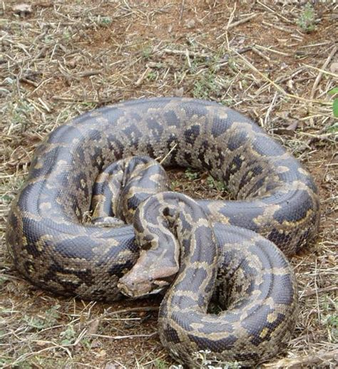 film ular laut planet berita 7 ular paling berbahaya bagi manusia