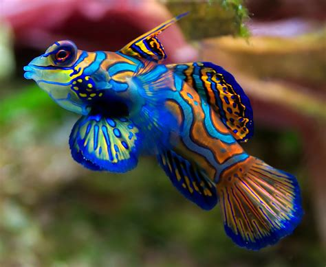 most beautiful colors top 10 most beautiful and colorful fish