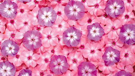flower wallpaper zip flower pink background 183