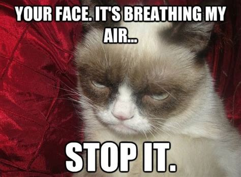 Grumpy Face Meme - 7 best grumpy cat memes images on pinterest chistes