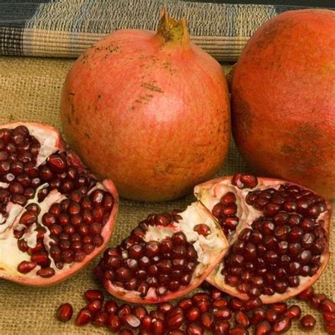 melograno coltivazione in vaso melograno coltivazione piante da frutto coltivazione