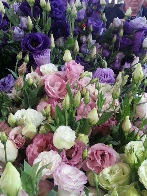 Pflanzen Kaufen 1081 by Lysianthus Ganzes Jahr In Verschieden Farben Eher Rosa