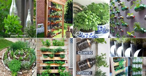 brilliant  creative diy herb gardens  indoors