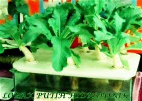 Vitrase Putih Transparan Bunga Lebar 200 Cm Tinggi 180 Cm penanaman hidroponik takung hidroponik di malaysia
