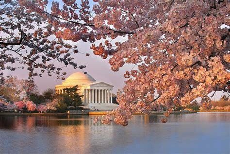 cherry blossom festival dc places to visit in washington dc