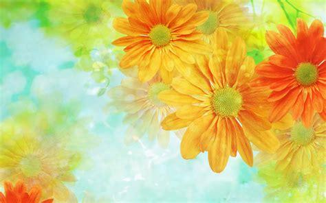 imagenes de rosas full hd fondo con hermosas flores hd 1920x1200 imagenes